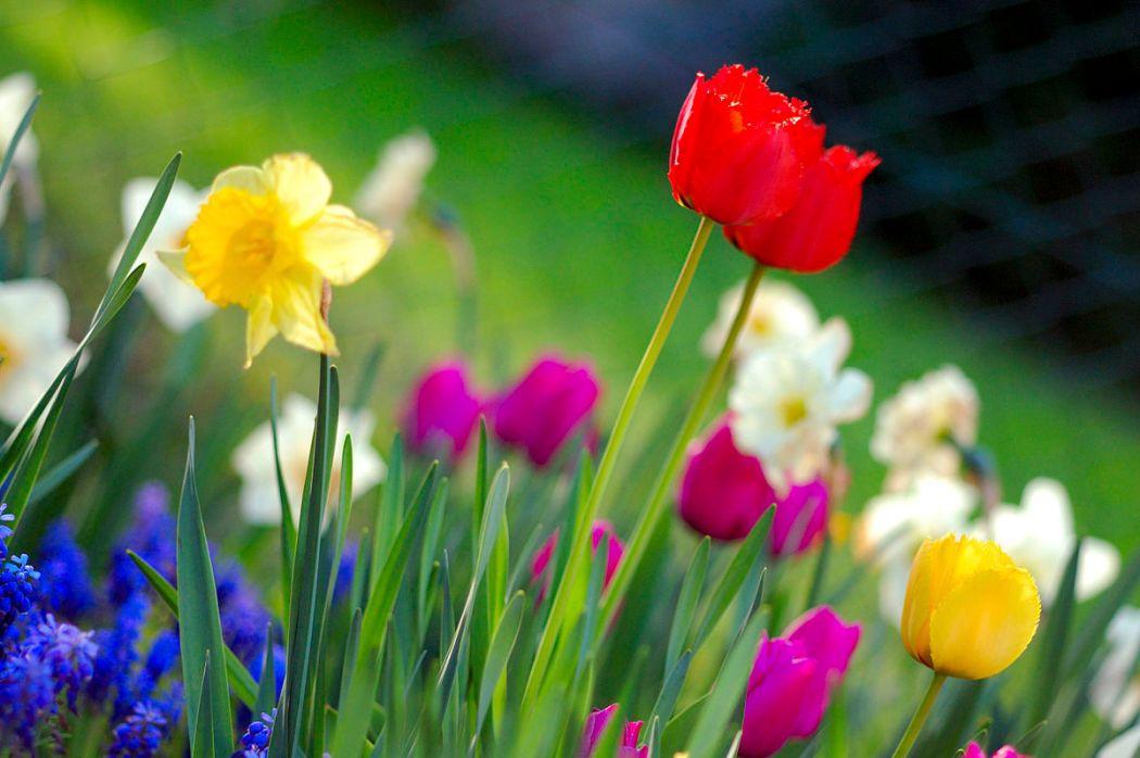 1200px-Colorful_spring_garden